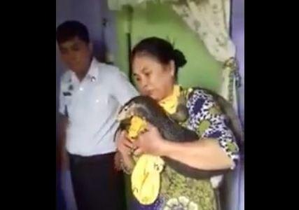 Heboh! Seorang Wanita di Palopo Ngaku Lahirkan Biawak, Disusui seperti Bayi