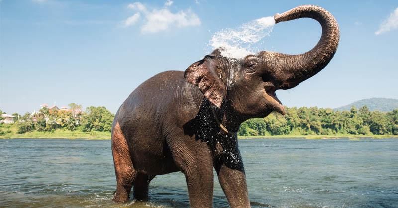 Do You Know Ternyata Gajah Satu Satunya Mamalia Yang Tak Bisa