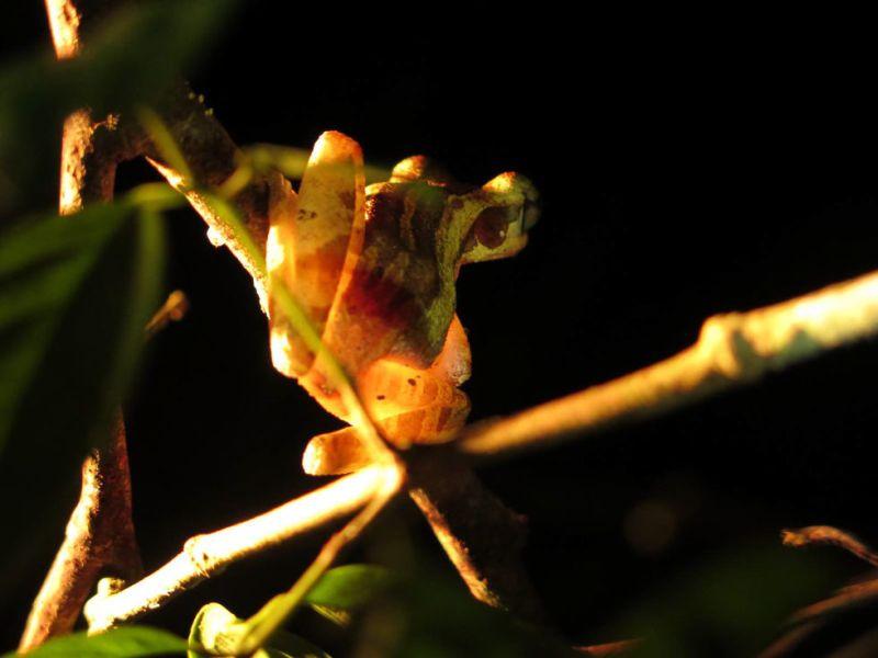 https: img.okezone.com content 2017 08 10 406 1753587 hutan-wehea-spot-terbaik-melihat-kehidupan-alam-liar-di-kalimantan-Bz23uPabEF.jpg