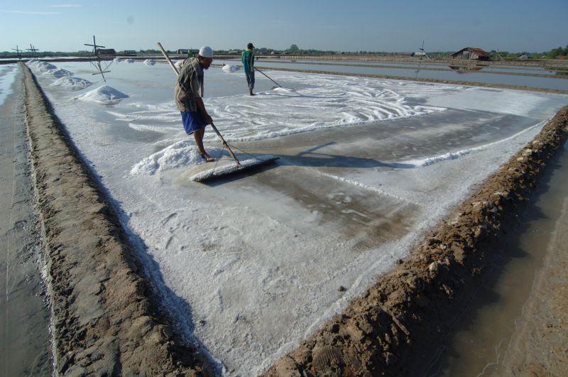 Hore! Garam Impor 52.500 Ton Sudah Tiba, Harga Diharap Segera Turun