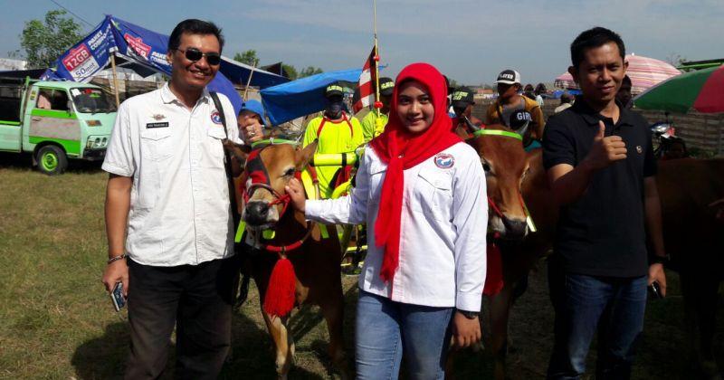 DPD Pemuda Perindo Kabupaten Sampang Menggelar Karapan Sapi (Foto: Syaiful/Okezone)
