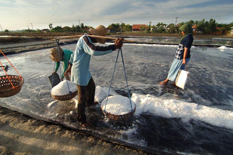 Wow! Kembangkan Produksi Garam, Yogyakarta Anggarkan Rp1,5 Miliar