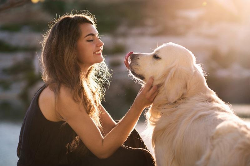 https: img.okezone.com content 2017 08 17 298 1757921 jangan-sembarangan-anjing-kesayangan-tidak-boleh-dikasih-cokelat-lho-ini-alasannya-Uh4PMTBMAQ.jpg