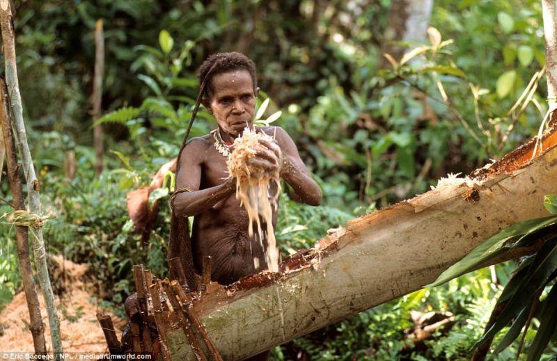 https: img.okezone.com content 2017 08 21 406 1759832 uncover-indonesia-mengulik-korowai-suku-kanibal-di-papua-yang-jadi-sorotan-dunia-YudW6XF76c.jpg