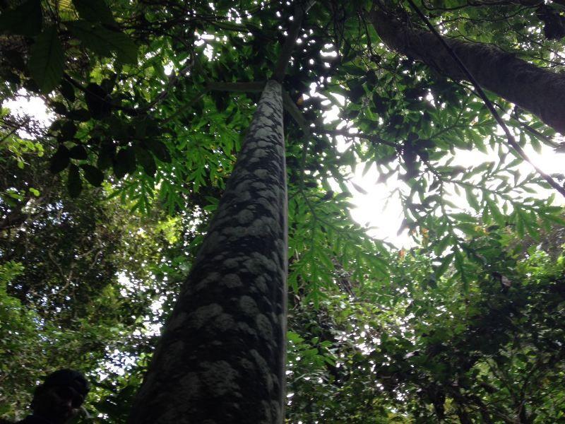 https: img.okezone.com content 2017 08 21 406 1760110 uncover-indonesia-menikmati-keindahan-bunga-bangkai-raksasa-di-bumi-rafflesia-L3PxuDMBoq.jpg