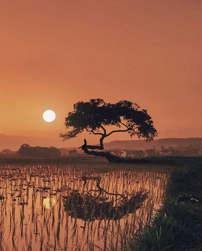 https: img.okezone.com content 2017 08 23 406 1761274 share-loc-berburu-foto-mitos-pohon-pengantin-salatiga-spot-indah-para-juru-kamera-lcXp8uqdhn.JPG