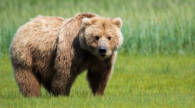 https: img.okezone.com content 2017 08 29 298 1765604 gawat-gara-gara-climate-change-beruang-grizzly-sekarang-jadi-vegetarian-oyfZE81rau.jpg