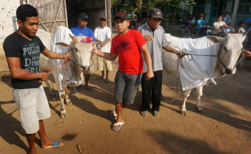 IDUL ADHA 2017: Sederet Tradisi di Indonesia Sambut Lebaran Haji ...