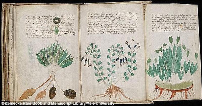 Ilmuwan Ungkap Dokumen Paling Misterius Abad Pertengahan, Ternyata Ini Isinya