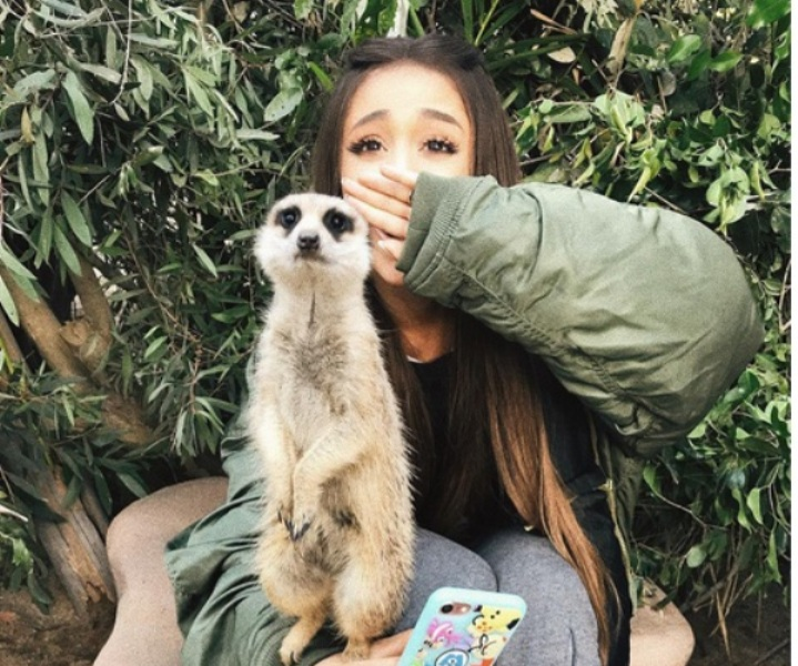https: img.okezone.com content 2017 09 12 406 1774317 bikin-iri-berkunjung-ke-kebun-binatang-australia-ariana-grande-nempel-terus-dengan-koala-meerkat-AgavDnm0co.jpg