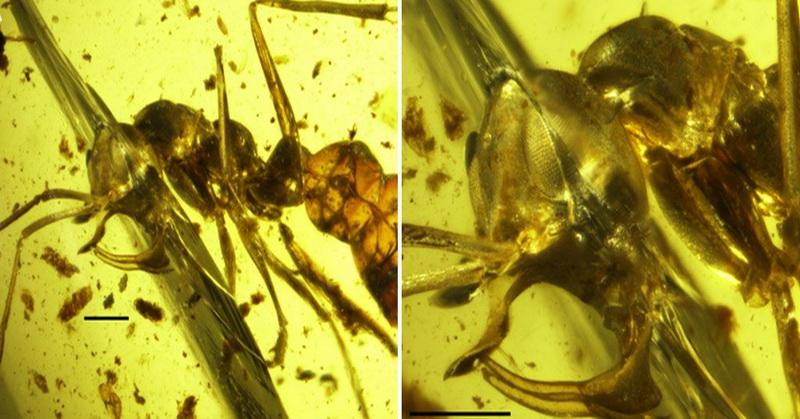 Ngeri! Ini Bentuk Semut 'Neraka' Paling Menakutkan yang Sudah Punah