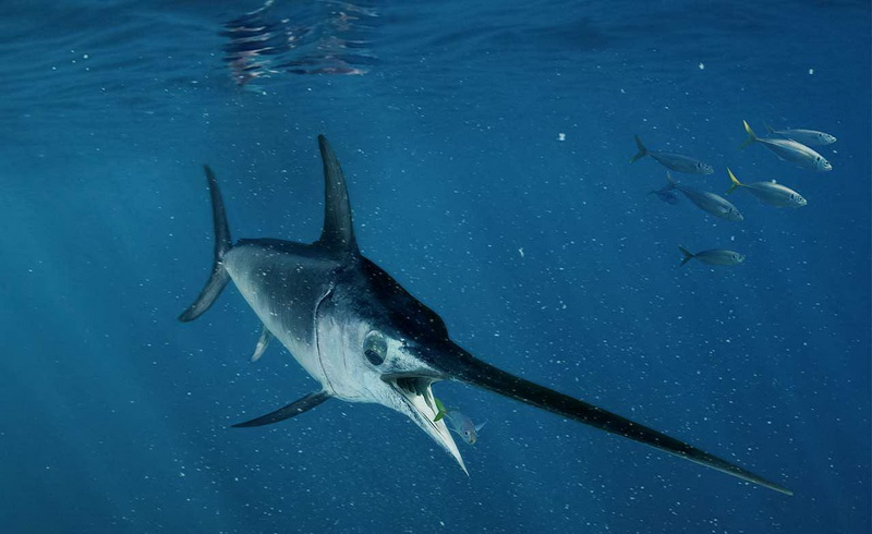 Terancam Punah, Stop Makan Tiga Jenis Ikan Ini, Salah Satunya ...