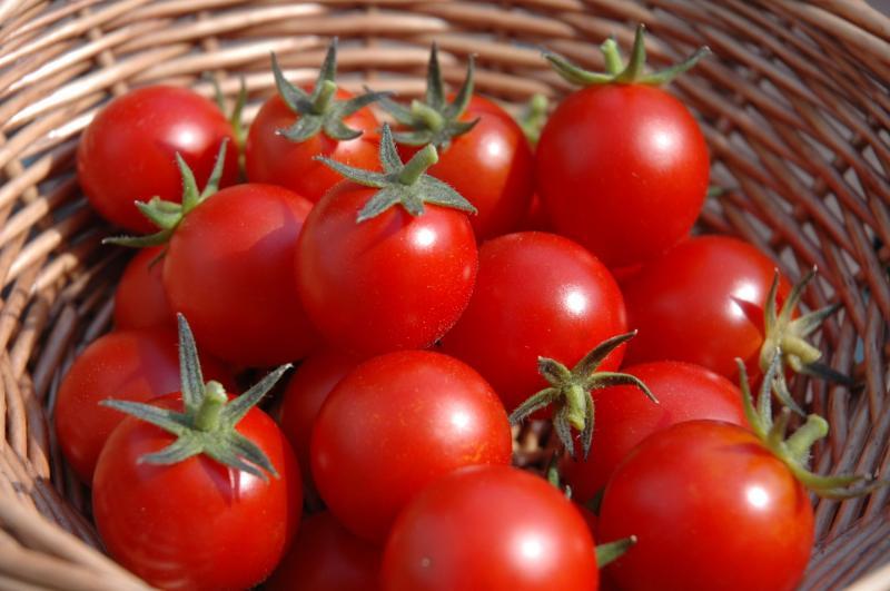 Jempol Keterbatasan Lahan Mahasiswa Ciptakan Sistem Hidroponik Otomatis Untuk Tanam Tomat Cherry Okezone News