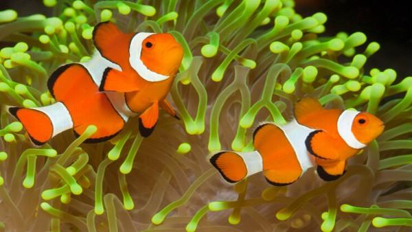 Download 65 Koleksi Cara Membuat Gambar Ikan Nemo HD Terbaik