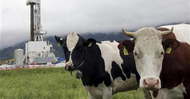 43++ Lambung pada hewan ruminansia berperan dalam proses terbaru