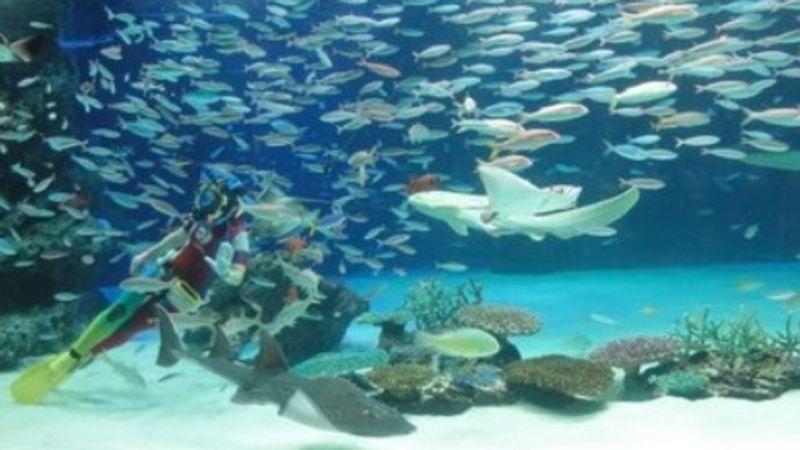 Kasihan Gara Gara Kekurangan Oksigen Lebih Dari 1 000 Ikan Mati Di Akuarium Jepang Okezone News