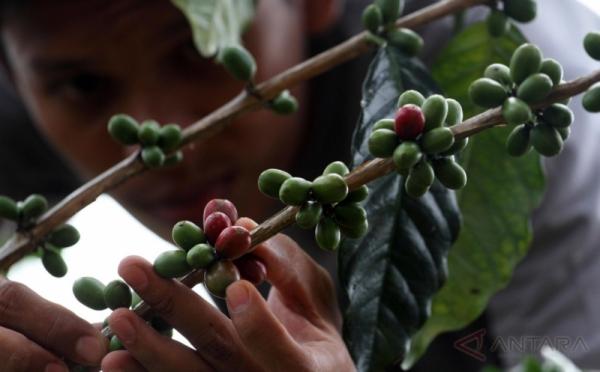 https: img.okezone.com content 2017 11 13 337 1813438 kembangkan-pertanian-kopi-deptan-siapkan-sumber-daya-manusia-dari-kaum-muda-cJwoe9sls2.jpg