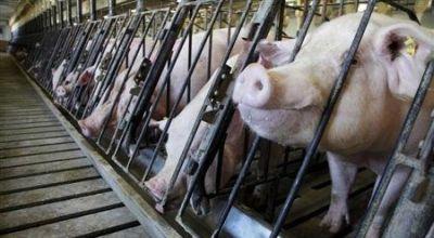 https: img.okezone.com content 2017 11 15 320 1814320 thailand-kepincut-investasi-peternakan-babi-berkualitas-ekspor-di-ri-QLGGJQ2kqr.JPG