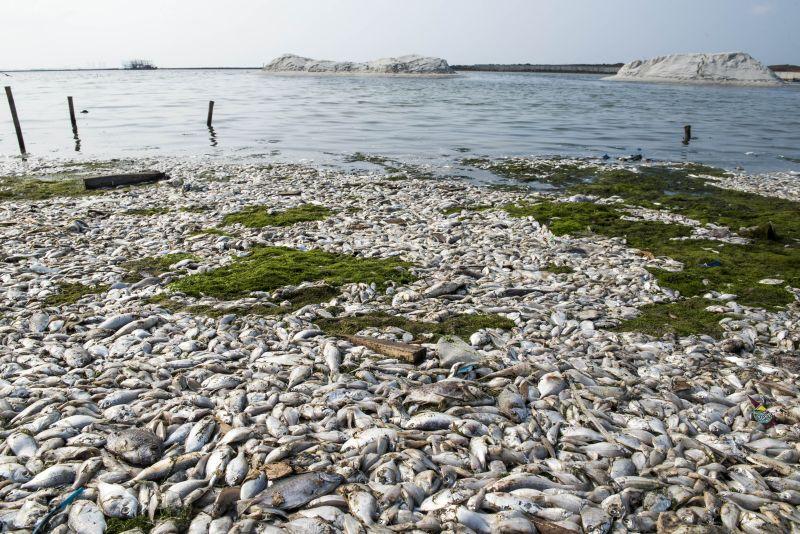 https: img.okezone.com content 2017 12 05 340 1825669 pasca-ratusan-ton-ikan-mati-udara-sekitaran-danau-maninjau-kini-tercemar-P8Vr9nQ7er.jpg