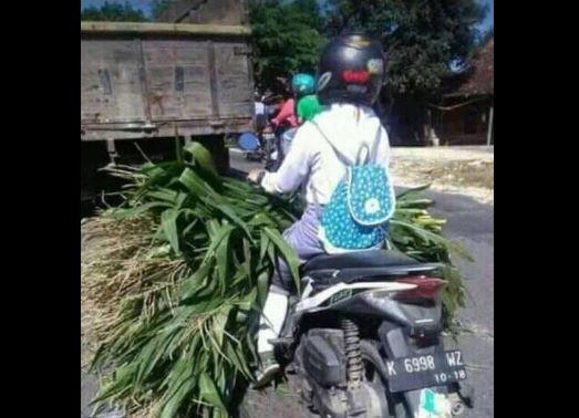 https: img.okezone.com content 2017 12 13 512 1829596 pulang-sekolah-angkut-pohon-jagung-siswi-cantik-asal-grobogan-viral-di-medsos-d68961TCMu.JPG