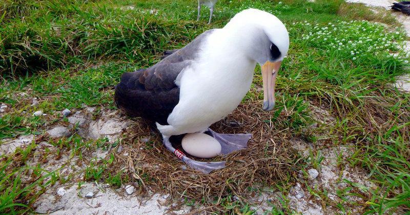 Burung Liar Tertua Di Dunia Bertelur Di Usia 67 Tahun Okezone Techno