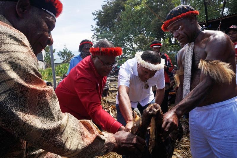 Foto Babi Di Potong Prosesi Potong 500 Ekor Babi Iringi Pencalonan Jhon Melkias Di Pilgub Papua Okezone News