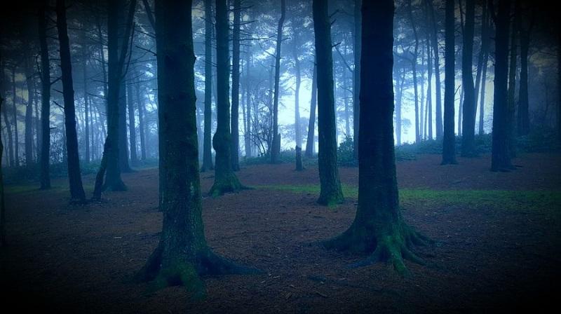https: img.okezone.com content 2018 01 08 406 1841505 di-balik-misteri-hutan-aokigahara-tempat-bersemayam-ratusan-nyawa-manusia-cgVVgVvWPB.jpg
