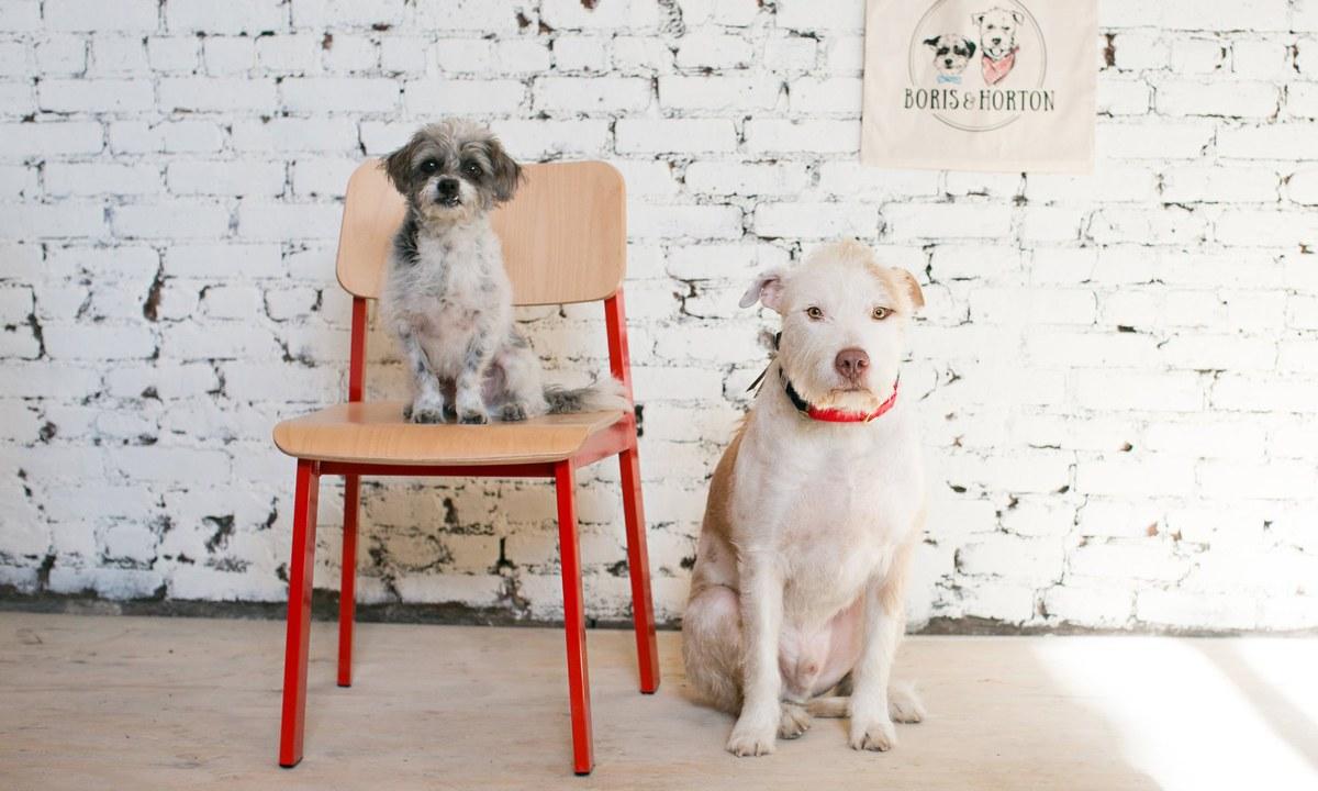 https: img.okezone.com content 2018 01 10 298 1842673 hore-awali-tahun-2018-new-york-buka-kafe-anjing-pertama-u1f4V7W2cb.jpg