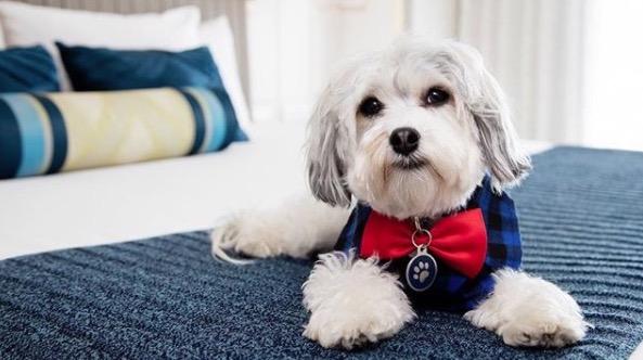 https: img.okezone.com content 2018 01 10 406 1842726 intip-kamar-hotel-berbintang-khusus-tempat-menginap-anjing-peliharaan-Jn5Zu8GtPh.jpg