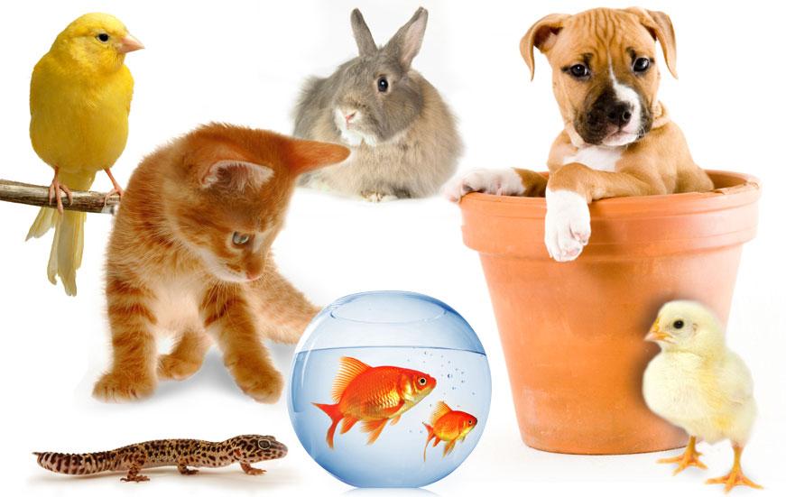 https: img.okezone.com content 2018 01 12 481 1844220 memelihara-hewan-di-rumah-ternyata-bisa-menghilangkan-stres-Ut0Lm6Nc5V.jpg