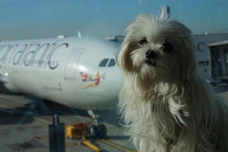https: img.okezone.com content 2018 01 14 194 1844743 yuk-berkenalan-dengan-anjing-supermodel-yang-jadi-selebgram-UKiqgPQA5C.jpg