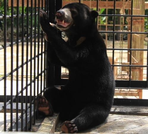 https: img.okezone.com content 2018 01 26 340 1850930 beruang-tangan-buntung-diserahkan-warga-ke-bbksda-riau-ZbpBkD4OZC.jpg