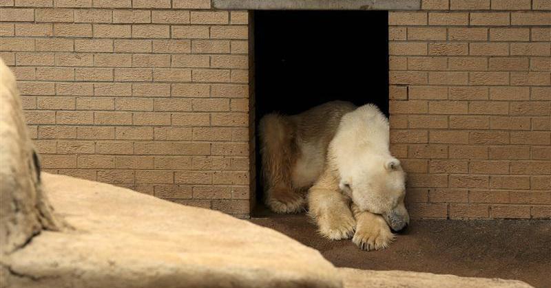 https: img.okezone.com content 2018 02 04 56 1854408 perubahan-iklim-pengaruhi-populasi-beruang-kutub-nhfycHjBLE.jpg