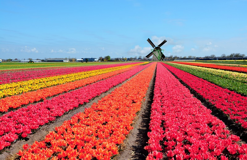 Image result for Taman Keukenhof, Belanda