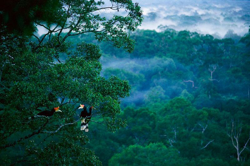 https: img.okezone.com content 2018 02 19 406 1861409 pohon-raksasa-ditemukan-di-hutan-kalimantan-selatan-besarnya-luar-biasa-NTp1KW9IBt.jpg