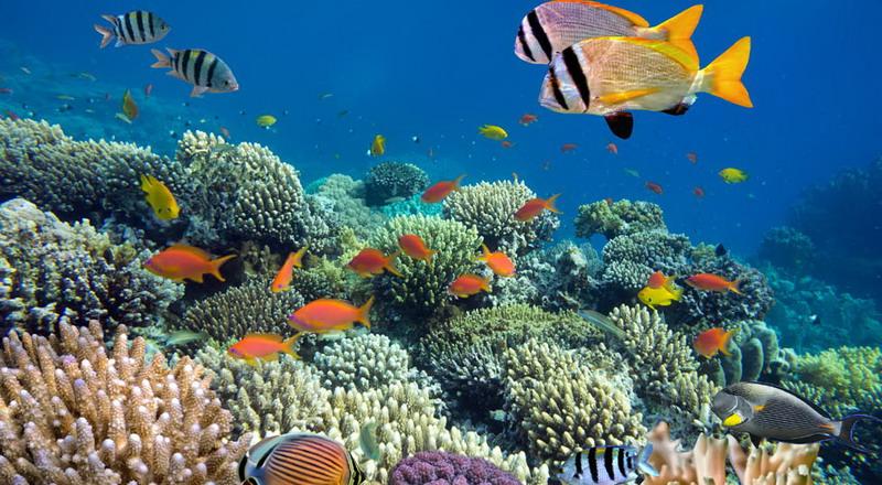 https: img.okezone.com content 2018 02 26 406 1864633 cantiknya-surga-dasar-laut-biluhu-penuh-dengan-ikan-nemo-dan-dori-YlutX2WaeZ.jpg