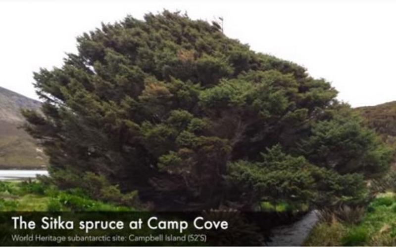 https: img.okezone.com content 2018 02 26 406 1864735 aneh-bin-ajaib-pohon-ini-tumbuh-sebatang-kara-di-pulau-terpencil-dunia-xQOZzV4TsC.jpg