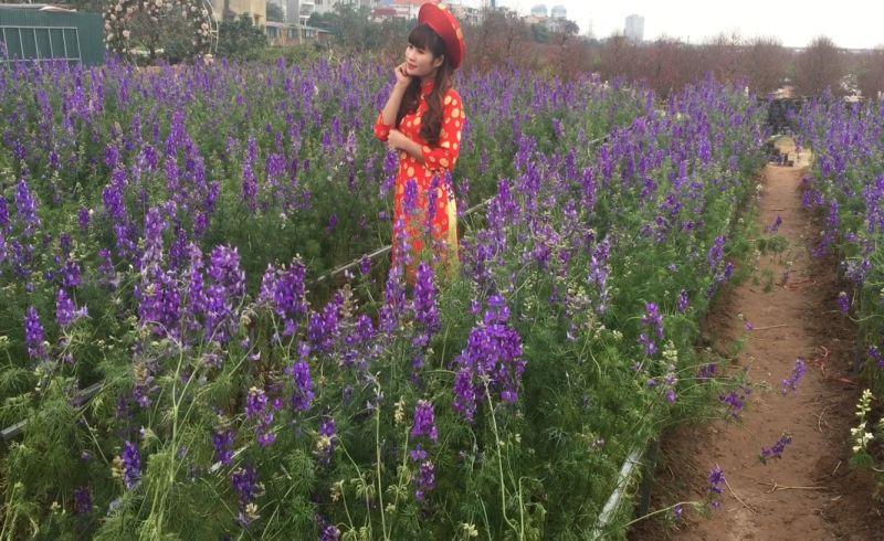 https: img.okezone.com content 2018 03 10 406 1870594 cantiknya-padang-bunga-lavender-spot-foto-sempurna-di-musim-semi-D9Gtiz5BbJ.jpg