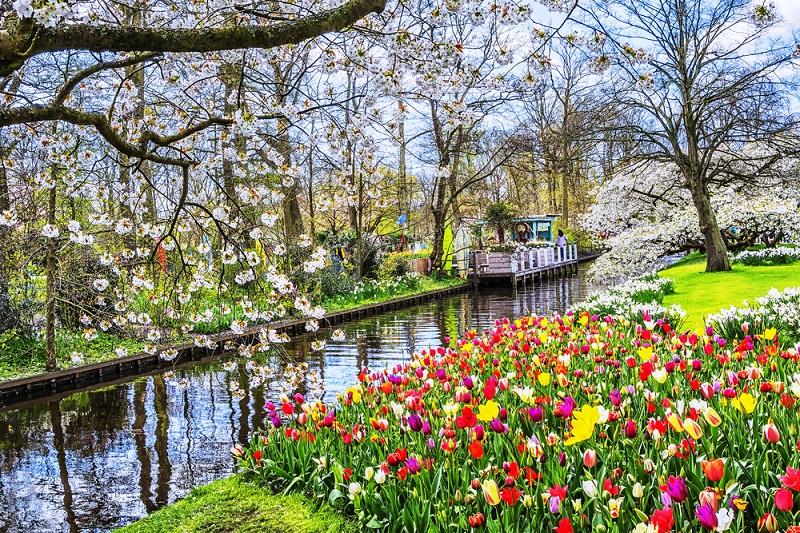 Menikmati Keindahan Surganya Bunga Tulip Di Keukenhof Belanda Okezone Travel