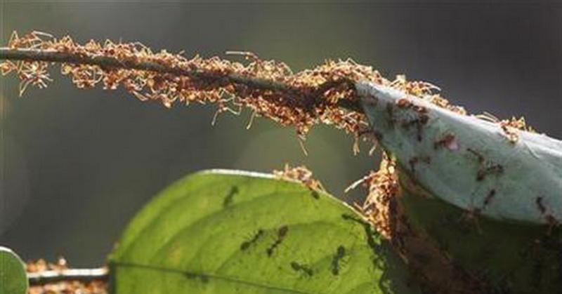https: img.okezone.com content 2018 03 19 56 1875055 5-fakta-menarik-mengenai-semut-yang-jarang-diketahui-cC4hu44o2j.jpg