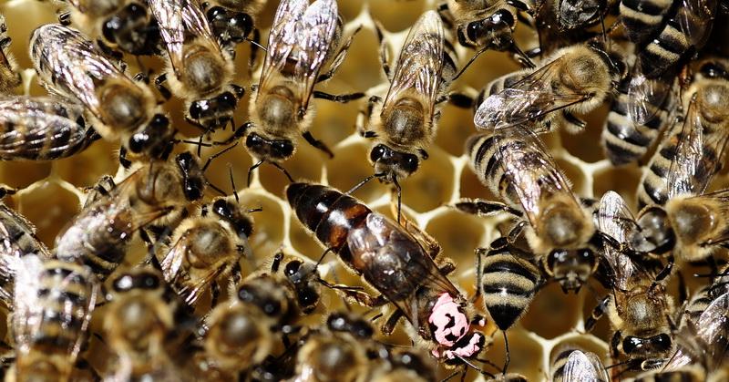 https: img.okezone.com content 2018 03 20 56 1875567 5-hal-menarik-tentang-lebah-nomor-1-sengatan-lebah-miliki-manfaat-jBh5lUN5bl.jpg