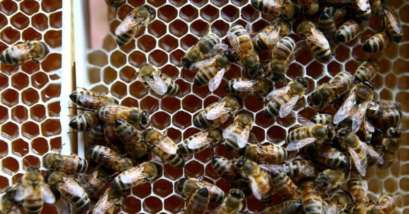 https: img.okezone.com content 2018 03 21 56 1876141 organ-tubuh-ini-tersembunyi-dalam-sistem-pencernaan-manusia-hingga-5-hal-menarik-tentang-lebah-nbgjDPbbcZ.jpg