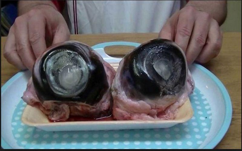 https: img.okezone.com content 2018 03 28 298 1879246 mata-tuna-hingga-hiu-fermentasi-ini-5-makanan-teraneh-di-dunia-7ZVhvhomMr.jpg
