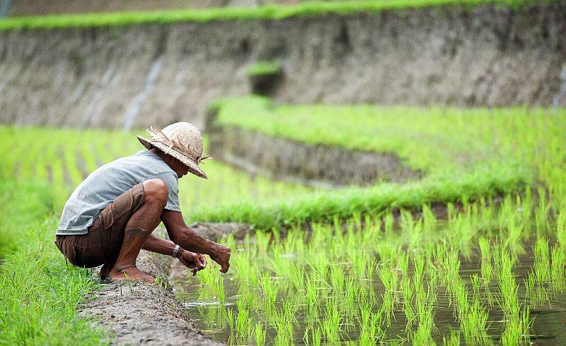 Produksi Pertanian Nasional Harus Pakai Data Akurat Okezone Economy