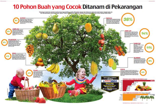 10 Pohon Buah Yang Cocok Ditanam Di Pekarangan Okezone Economy