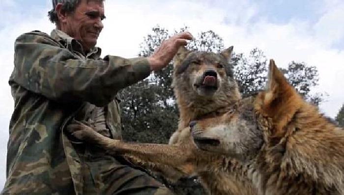 https: img.okezone.com content 2018 04 11 196 1885145 kecewa-dengan-manusia-pria-ini-lebih-pilih-hidup-bersama-serigala-wQvkLr9qqM.jpg