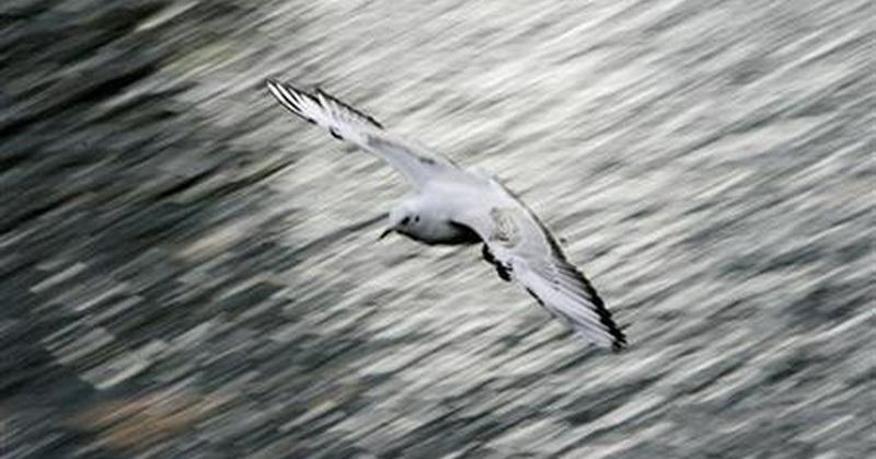 Tanpa pikir panjang, lelaki itu kemudian melarikan diri bersamaan dengan terbangnya burung camar dan ganja tersebu