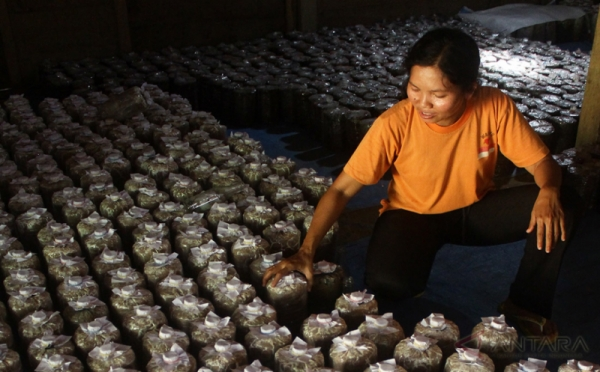 https: img.okezone.com content 2018 04 13 320 1886219 bisnis-budidaya-jamur-tiram-langsung-balik-modal-ketika-panen-N0EVc77iKC.jpg