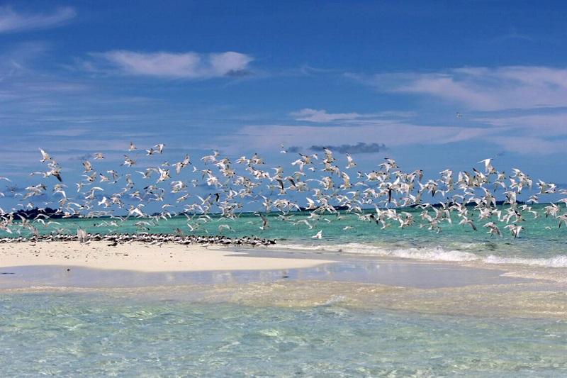 https: img.okezone.com content 2018 04 23 406 1890560 menikmati-pesona-baby-island-pulau-ribuan-burung-camar-di-aceh-uv5BGp3FbB.jpeg