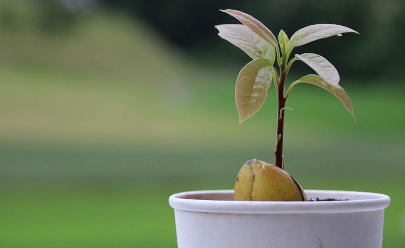 https: img.okezone.com content 2018 06 29 196 1915743 punya-lahan-kosong-di-belakang-rumah-5-pohon-buah-ini-cocok-ditanam-1TcuBpD4Br.jpg